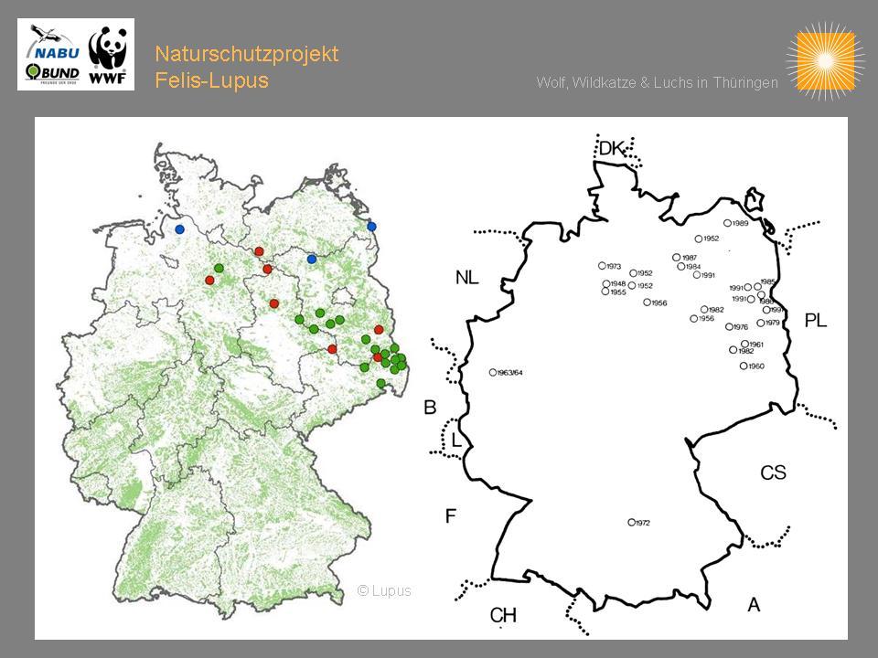 Wölfe In Brandenburg Karte.Verbreitung